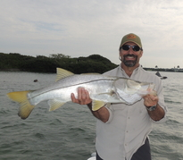 Tampa Florida Snook fishing trips